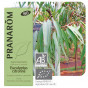 Huile essentielle d'Eucalyptus citronné - BIO !