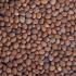 Graines à germer - Radis Daikon BIO