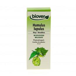 Humulus lupulus - Houblon - Teinture Mère