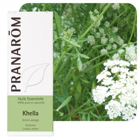 Huile essentielle de Khella ou Ammi visnage - 5 ml