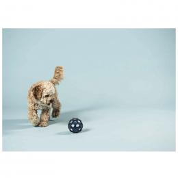 Jouet en caoutchouc naturel pour animaux de compagnie - Stellar Ball