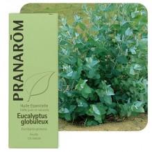 Eucalyptus Globulus essentiële olië