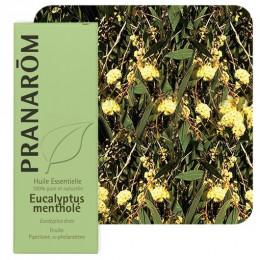 Brede pepermuntboom essentiële olië
