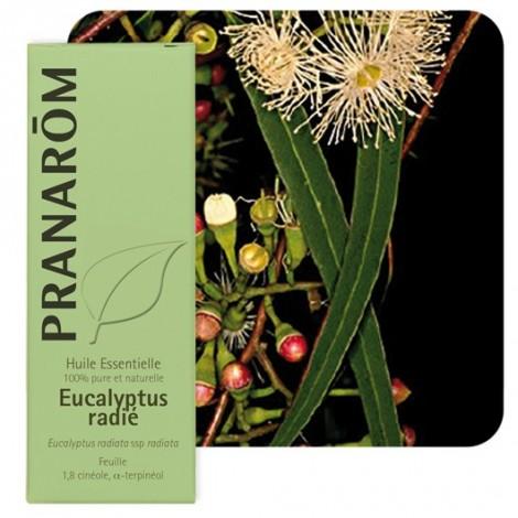 Eucalyptus radiata essentiële olië