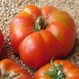 Brandywine tomaatzaden - 0,2 g